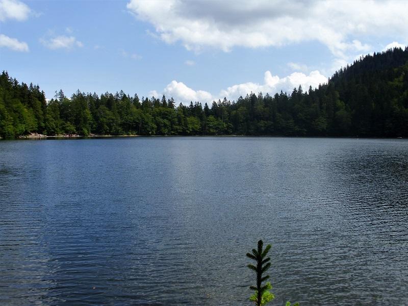 Titisee-Feldsee-Schluchsee - Feldsee-Lago2.jpg