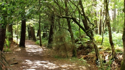 Foresta di Paimpont